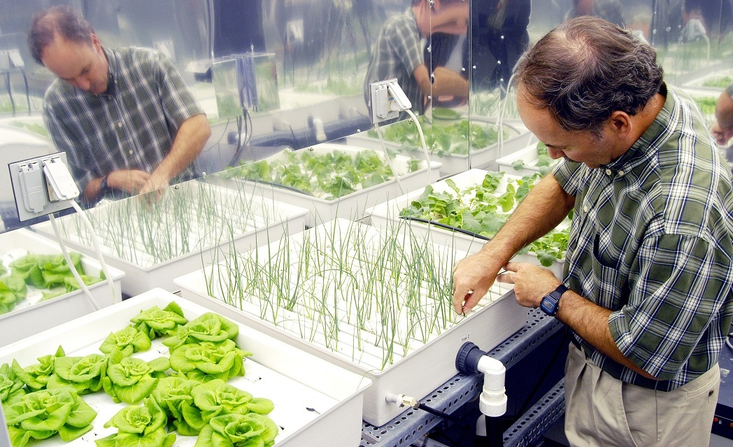 Why hydroponic foods are good for you